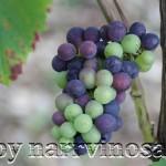 narrvinosaale.de - Narren-Wein-Tourismus